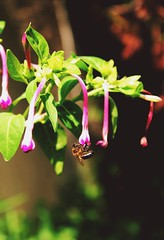 the flower doesn't dream of the bee, it blossoms and the bee comes.