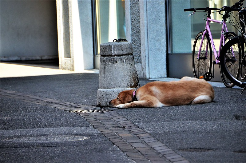 Dog 18.09 (2)