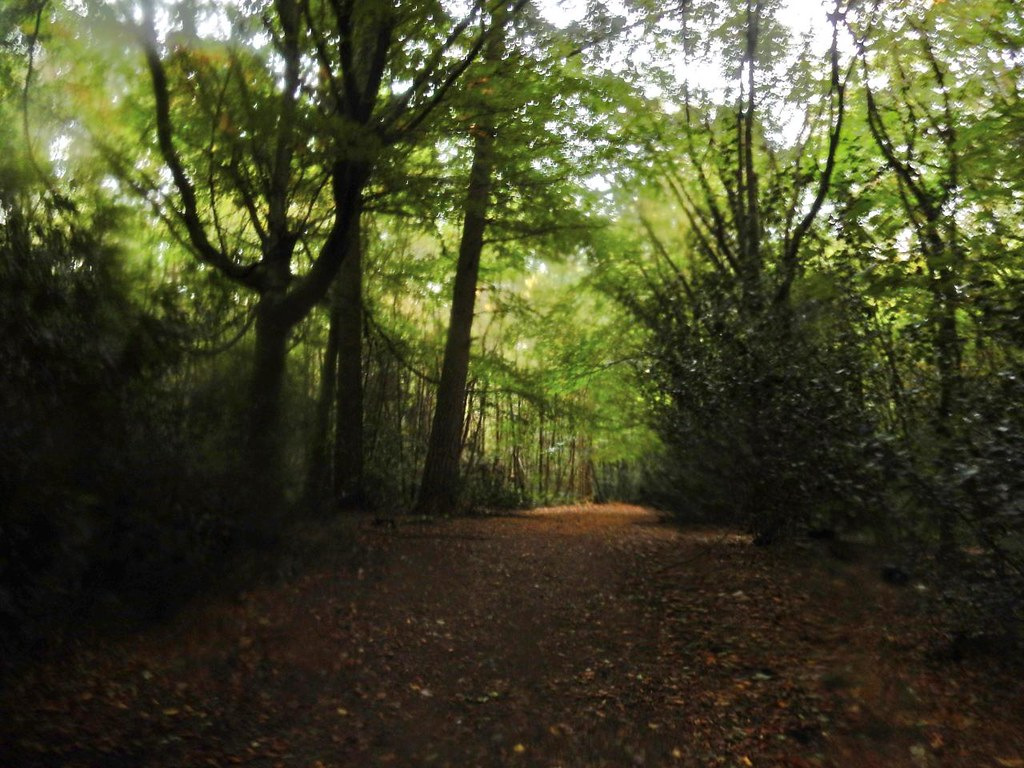 In the woods Oxted Circular