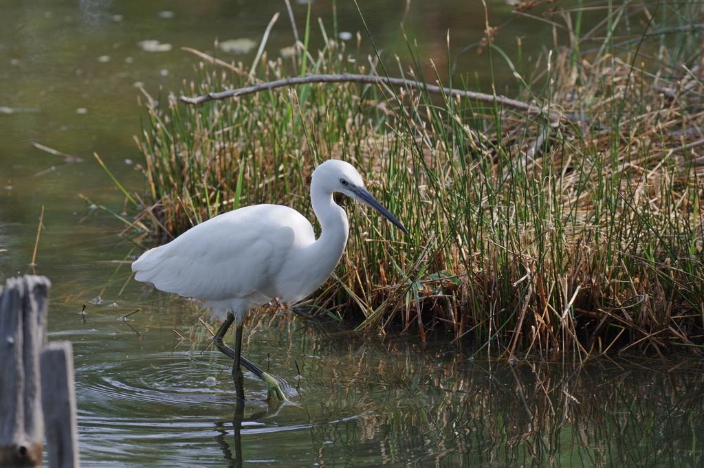 Sortie à la réserve ornithologique du Teich - 24 août 2018 - Page 2 30462962488_b028cdcfe8_o