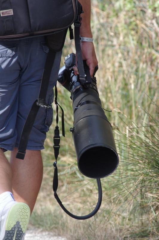 Sortie à la réserve ornithologique du Teich - 24 août 2018 - Page 4 30522633618_bac4efe335_b