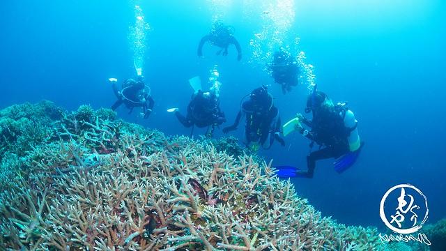 極上サンゴをたっぷり楽しみました♪