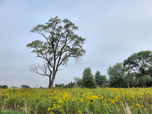 Tree at Nelson Lake 20180920