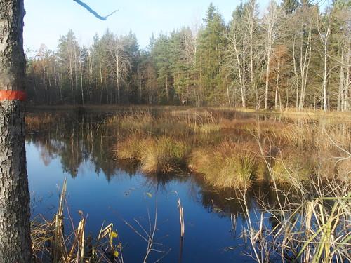 SÖ E48 Mesugnssjön skog