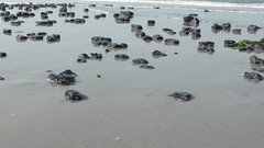 Malm at the beach, Westerstrand Schiermonnikoog