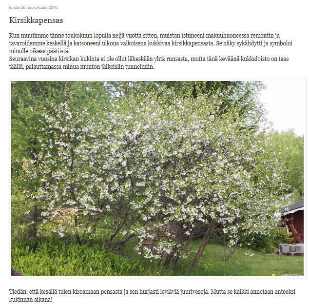 Kirsikkapensas.jpg