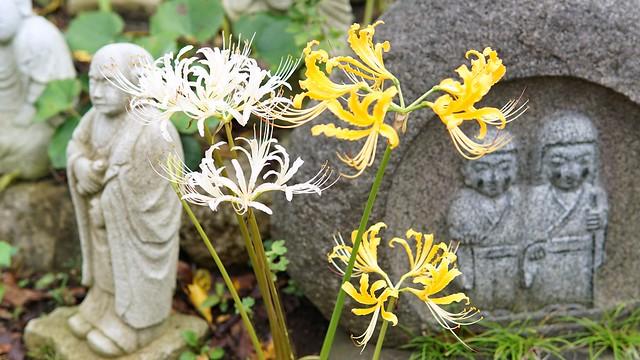 常泉寺(花寺)DSC00627-01