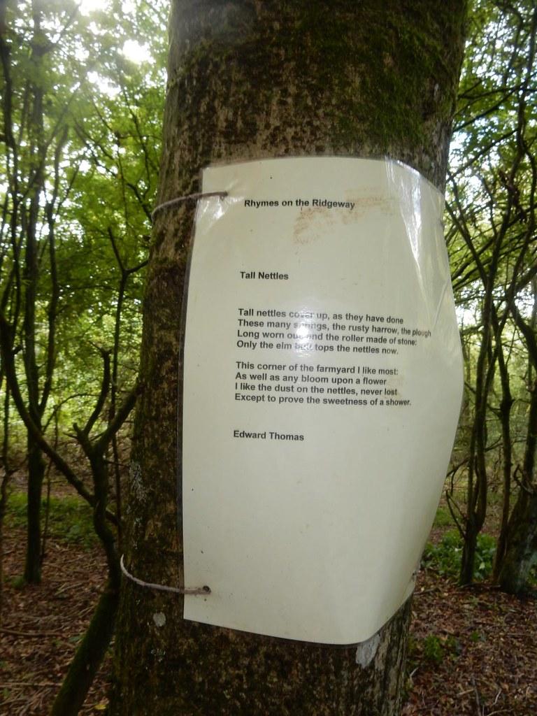 Poem on a tree Princes Risborough to Wendover