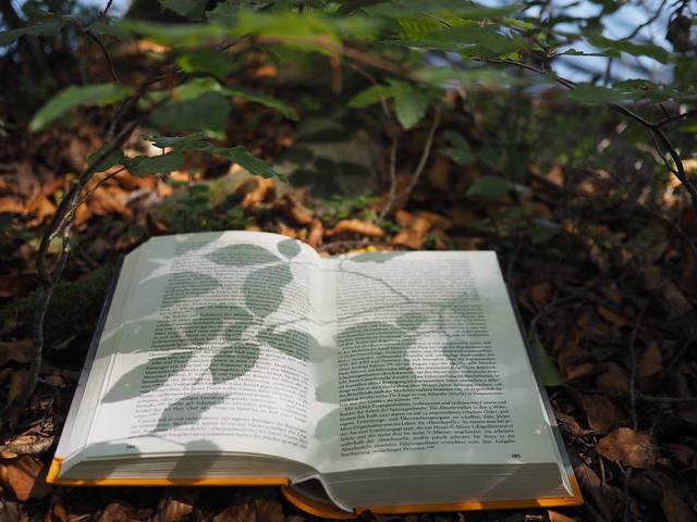 Reading Book in Underwood Beech Tree Forest Leaves © Buch Lesen Unterholz Wald Buche Laub Blätter ©