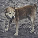 2017:02:07 15:45:46 - Old Dog Beach - Fehmarn - Schleswig-Holstein - Deutschland