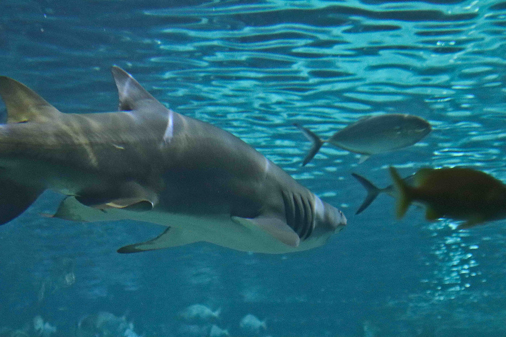 1 sept 2018 aquarium-21