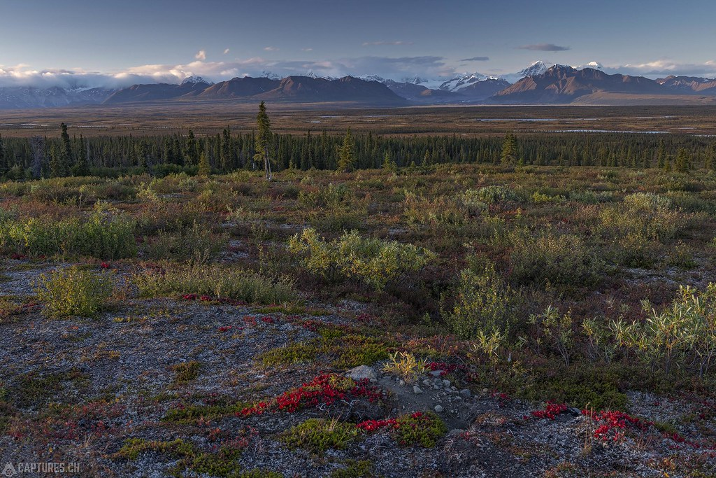 Tundra fall colors - Alaska