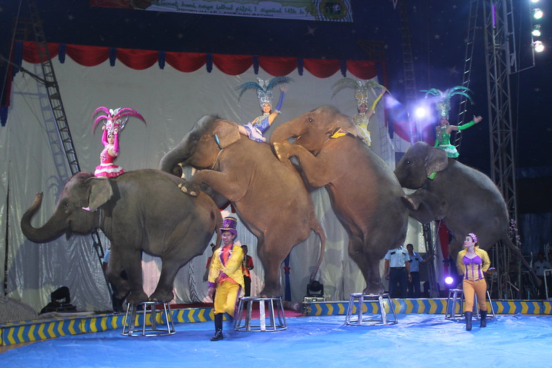 Oriental Circus_200715 (103)