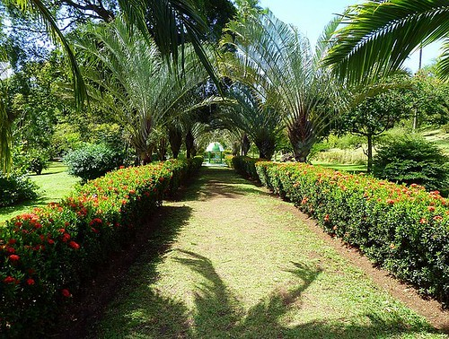 Smell the flowers in Kingstown, St. Vincent. From Top 10 Interesting Places to Visit in the Caribbean