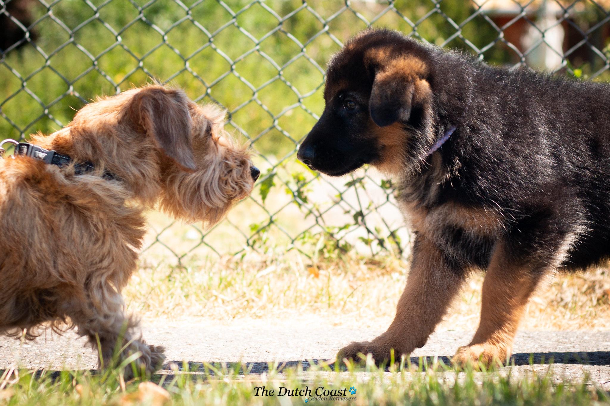Cliff en hondje