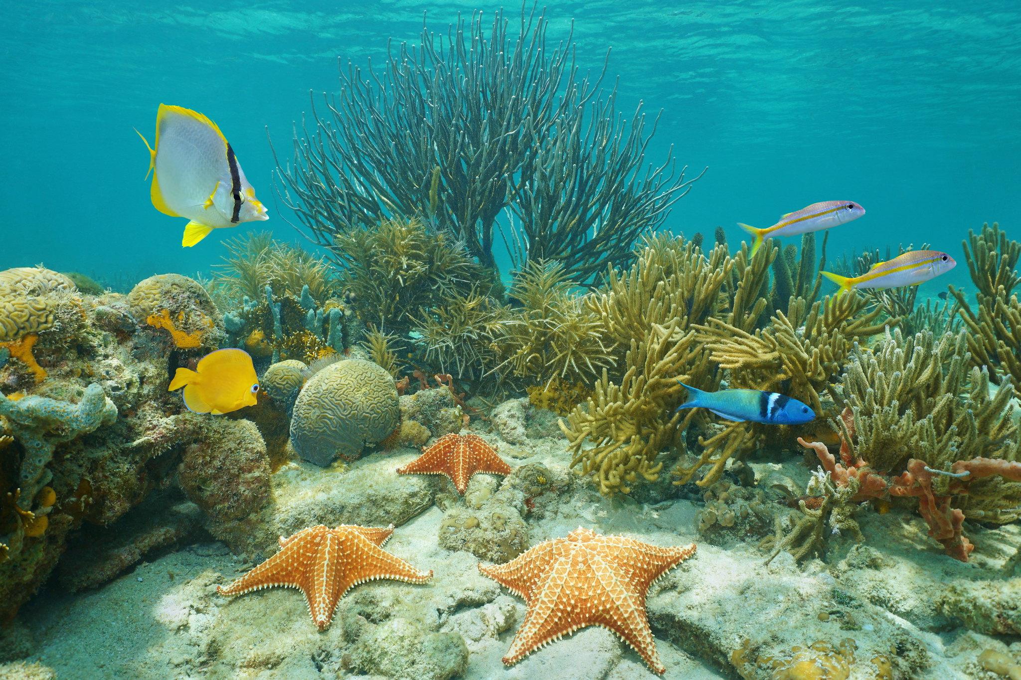 El cambio climático modifica la composición de los arrecifes - ICTA ...