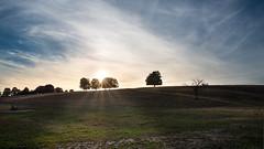 Sunset in pasture