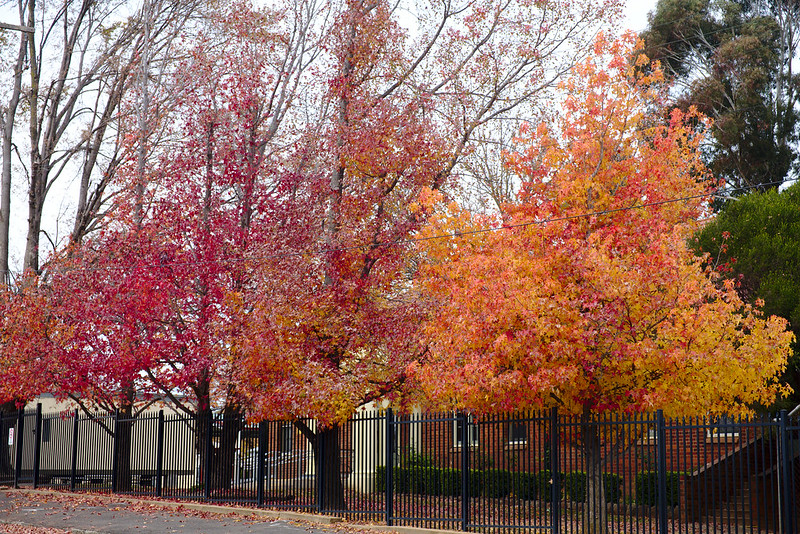 Autumn, Orange East Public School
