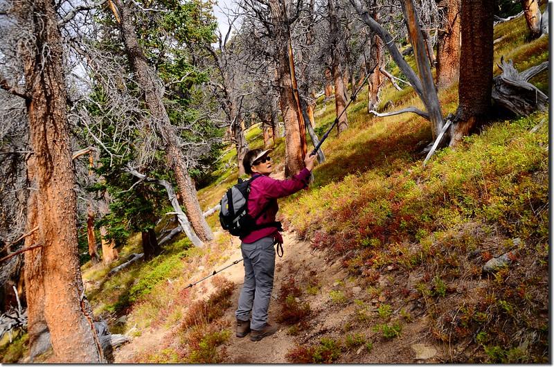 Continental Divide Trail (5)