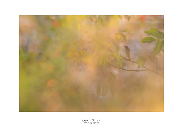 behind colors, Canon EOS 7D MARK II, Canon EF 300mm f/4L IS