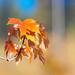 Seasonal Grace by Pacific NW / Nor Cal Surveyor