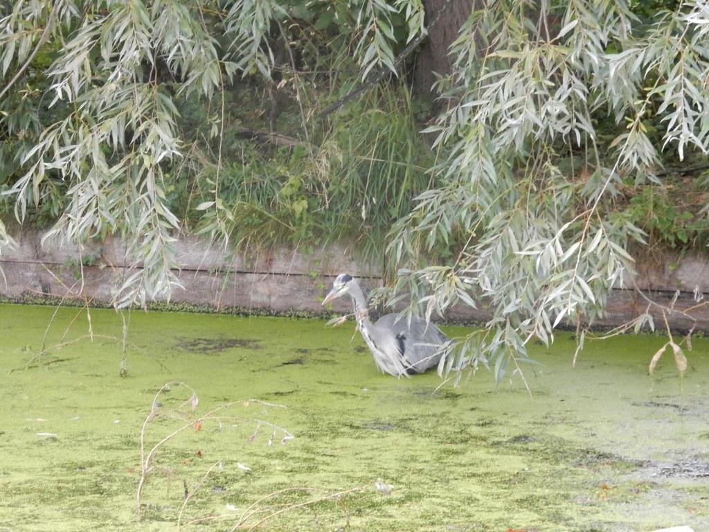 Gone fishin' - Clissold Park Woodberry Wetlands - Stoke Newington Reservoirs