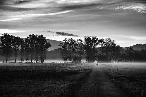 Into the morning fog....again