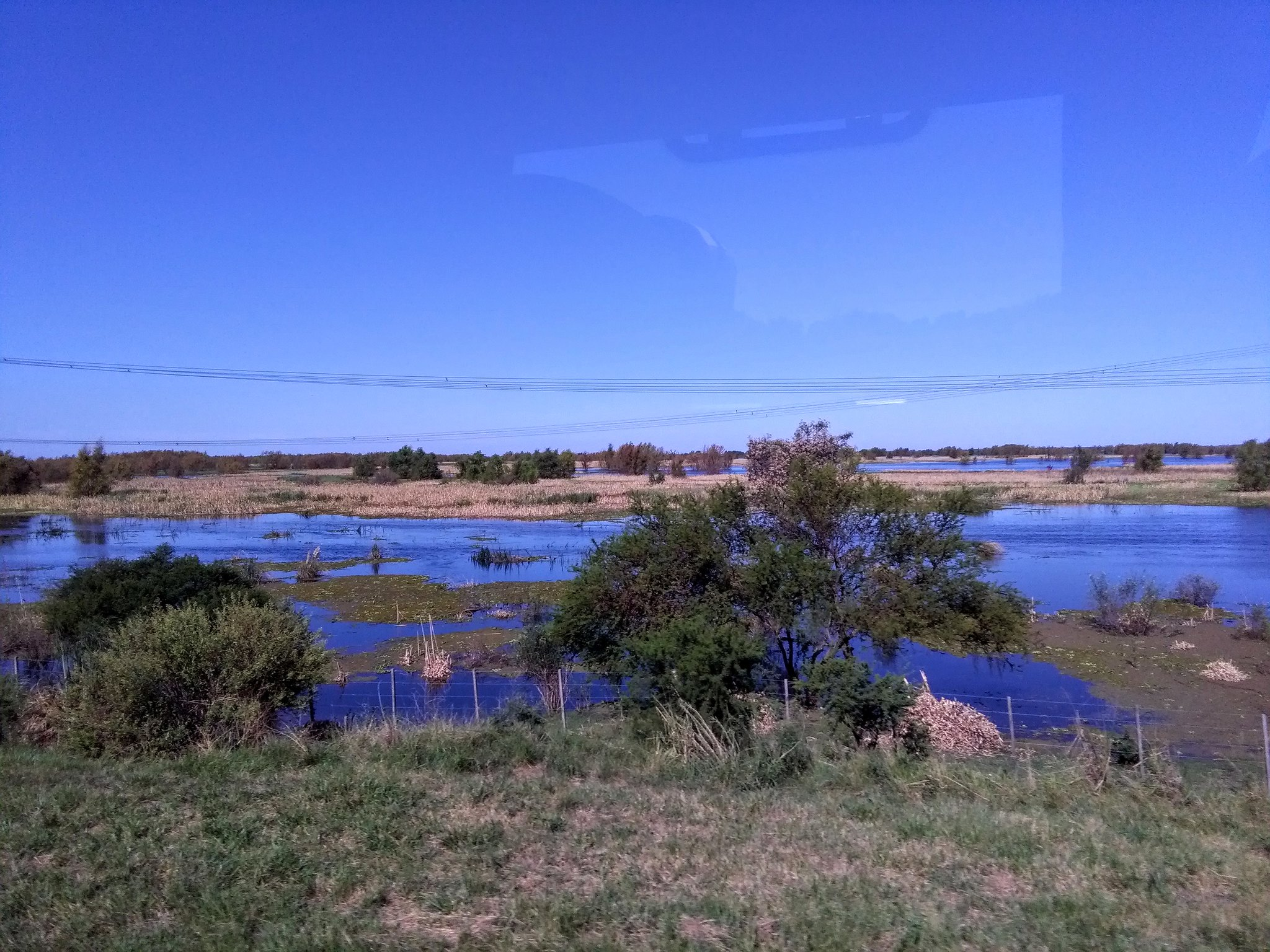 Marshes north of Buenos Aires
