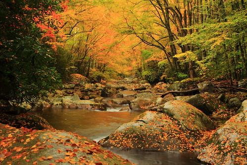 Big Creek Color