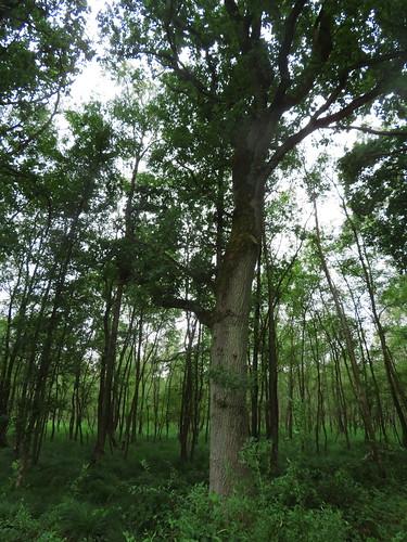 20180624 20 188 Baltica Wald Baum