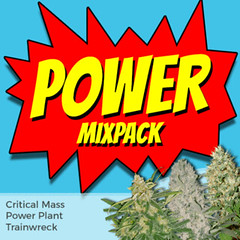 power-mixpack-marijuana-seeds-ilgm-3_large