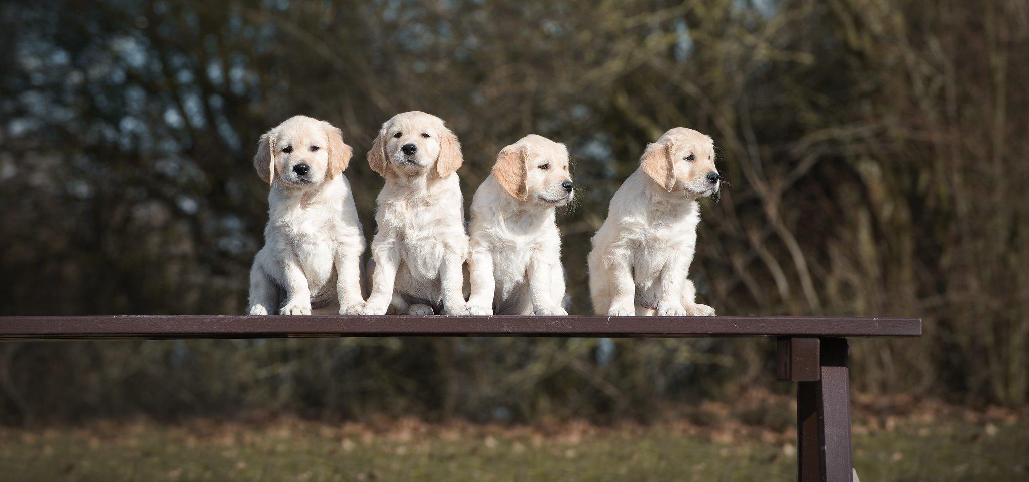 Duplo,Lilly,Teddy&Joyca