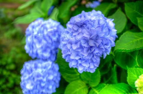 02-09-2018 flower