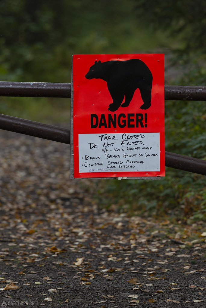 Bear warning - Alaska
