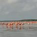 Mexico - Celestun - flamingos por Harshil.Shah