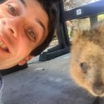 Quokka Selfie Versuche