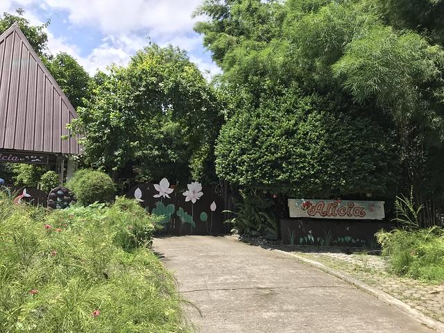 Alicia's garden