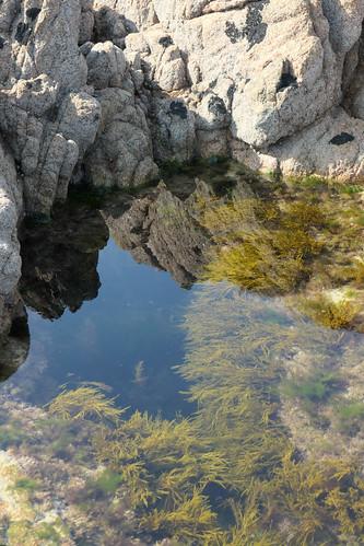 Plants in a tidal pool among boulders - Explore!