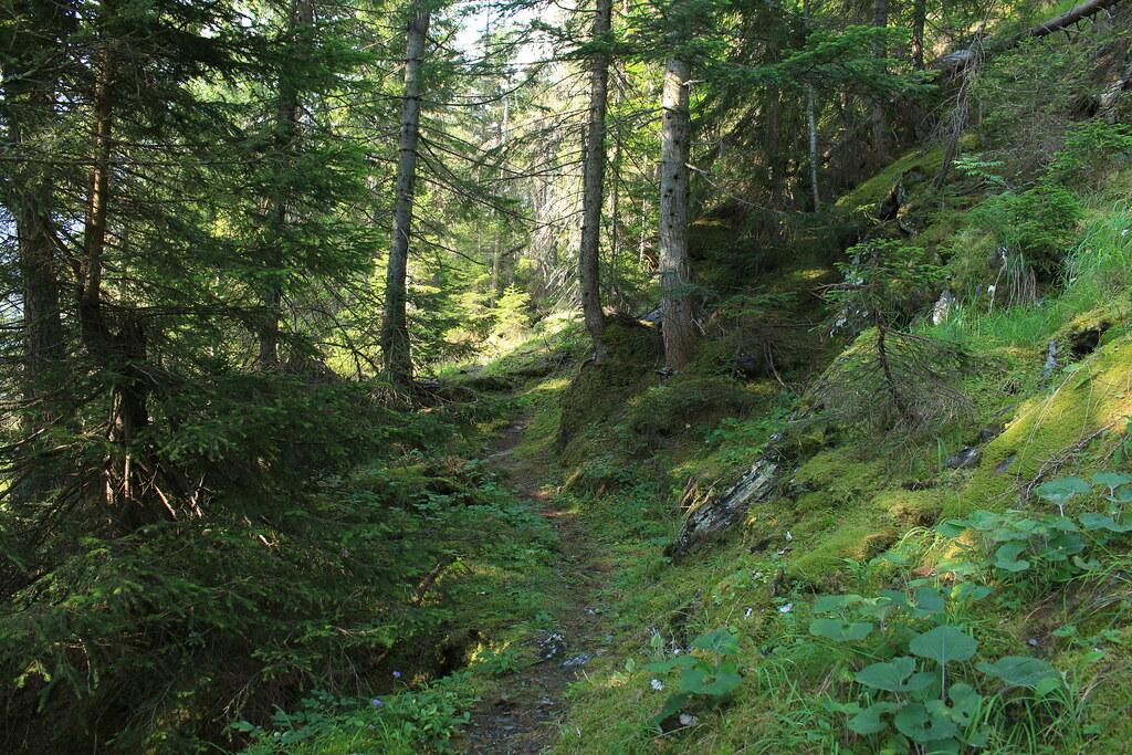 une belle forêt