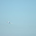 ANA B787 JA821A Leaving Haneda Airport 2