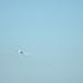 ANA B787 JA821A Leaving Haneda Airport 2