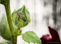 Backyard Bugs & Flowers