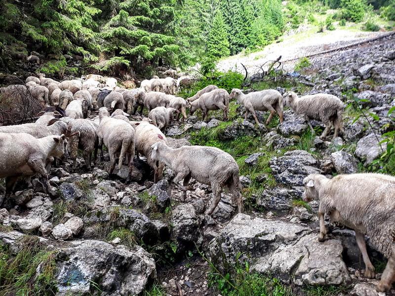 Drumetie in Piatra Craiului - Zarnesti-Creasta Nordica (10)
