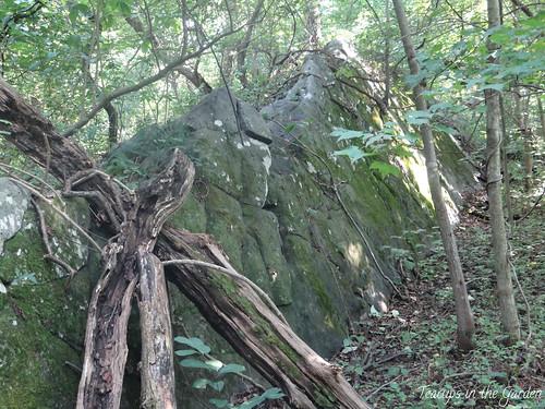Bear's Den Overlook 13