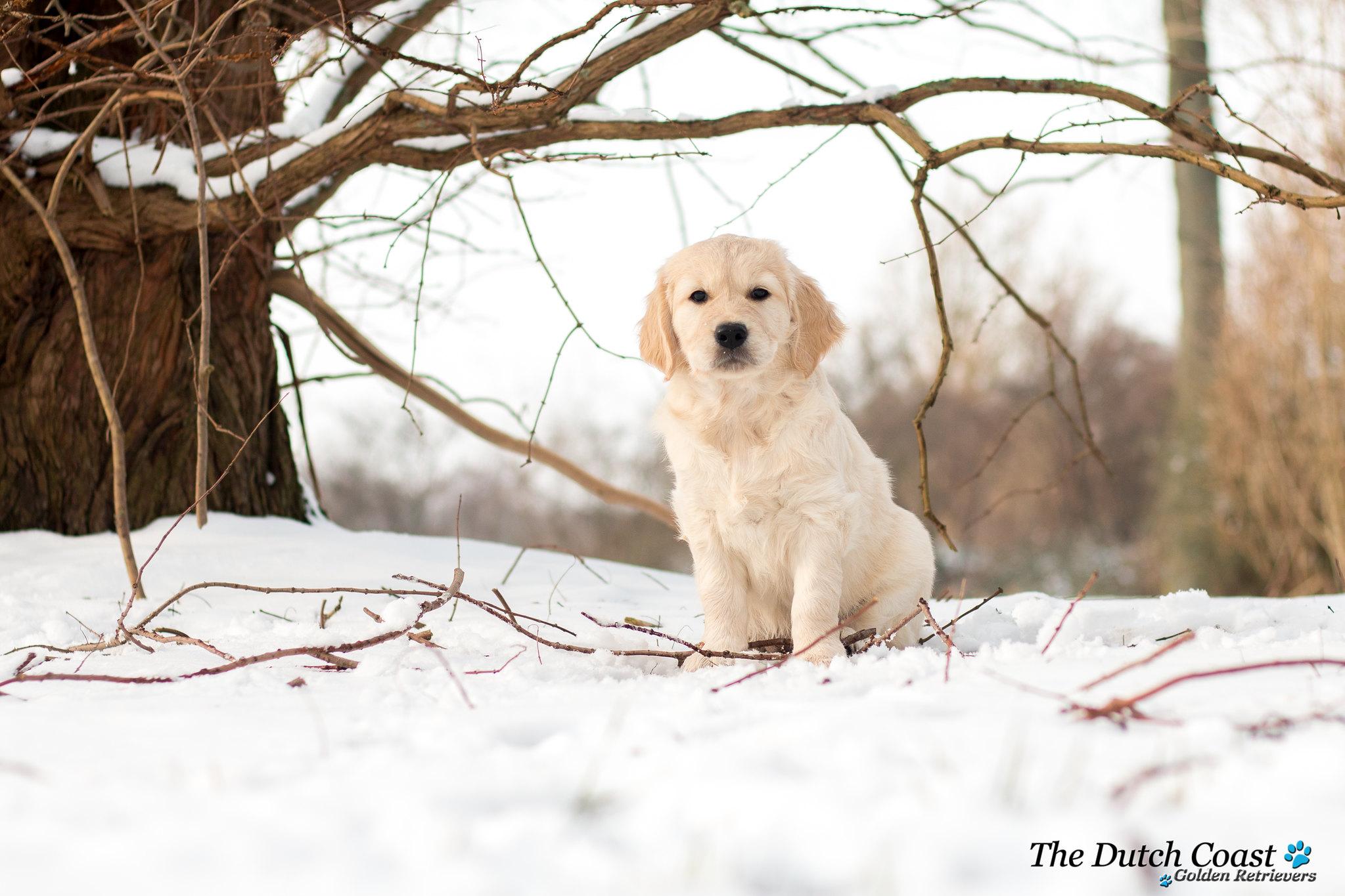 Lilly sneeuw