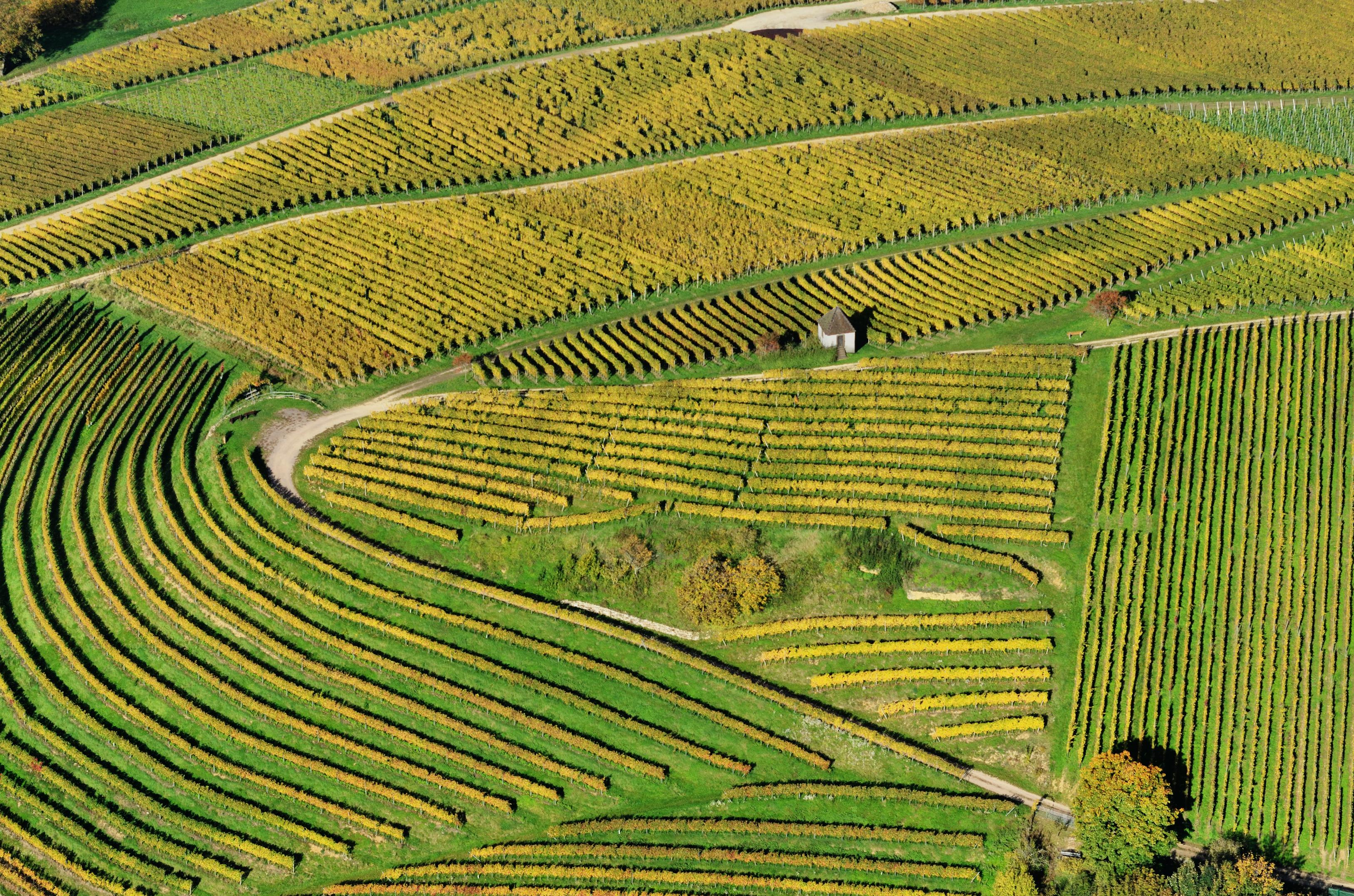 Aerial view of vineyards in Markgräflerland, Baden, Germany. Photo taken on October 21, 2012.