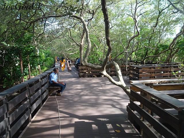 Boardwalk over the Mangroves