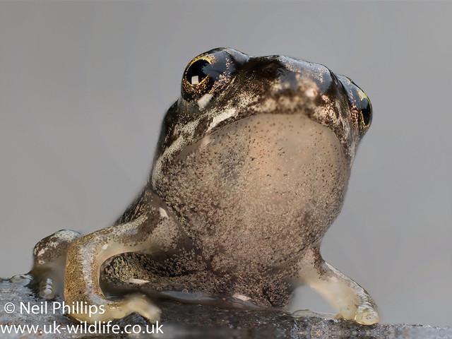 Froglet stack-3