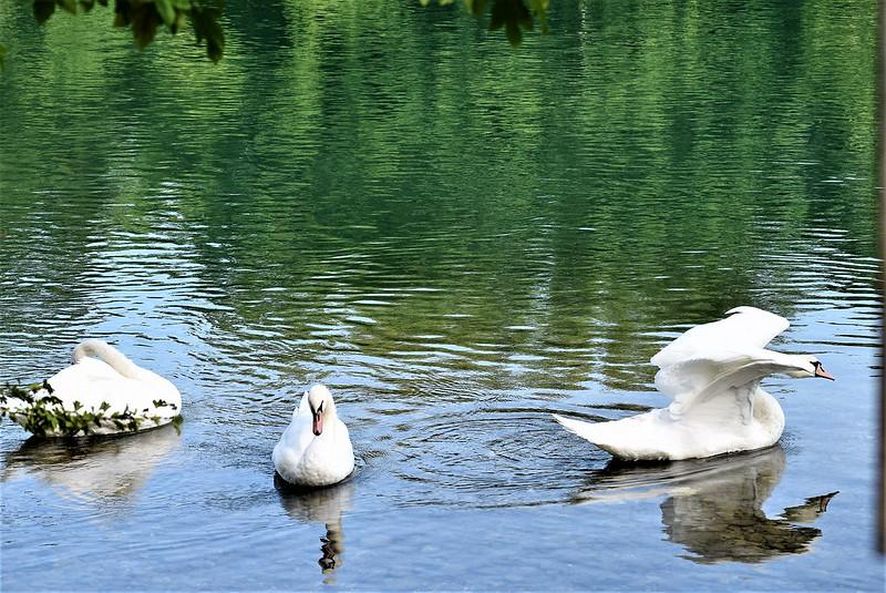 Swans 27.08 (6)