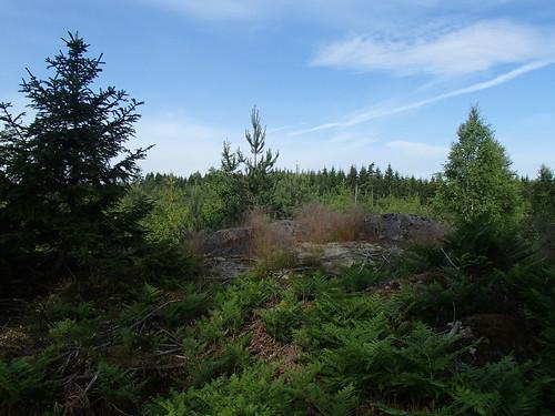 SÖ E47 Skogen